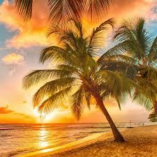 Palm Tree Wallpaper Tropical Palm Tree Wallpaper Awesome Tropical Palm Tree