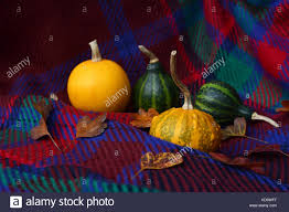 assorted yellow and green ornamental gourds with autumn leaves on