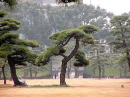 designer tree