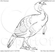 draw thanksgiving turkey anatomy of a turkey head images learn human anatomy image