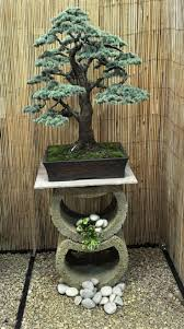 1931 best bonsai images on pinterest bonsai trees bonsai and