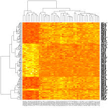 map r r to draw a heatmap from microarray data