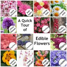 edible flowers for sale about us mrsfields