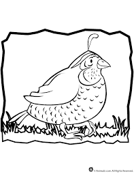 quail coloring pages coloring home