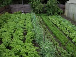 inspiring backyard vegetable garden with various plants and diy