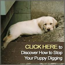 how to stop puppy digging