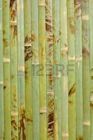 sample of homogeneous texture of green wood bamboo wallpaper stock