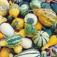 gourds ornamental gourds mix small