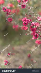condolences greeting card pink flowers on condolences background sympathy stock photo