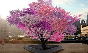the tree of 40 fruit is exactly as awesome as it sounds