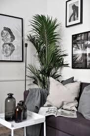 Plants For Living Room Best 10 Living Room Plants Ideas On Pinterest Apartment Plants