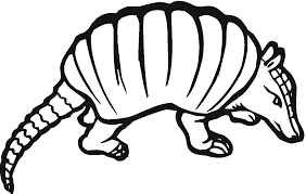 armadillo coloring page armadillo coloring pages sheets 8887