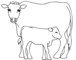 cow with bull calf coloring pages for kids bnl printable cows