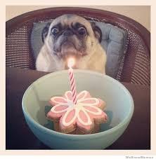 Birthday Dog Meme - meme template search imgflip