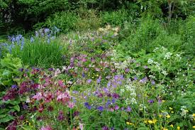 native english plants noel u0027s garden blog telling the story of uk naturalistic planting