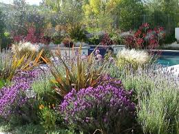 Drought Friendly Landscaping by Northern California Drought Resistant Landscaping Google Search