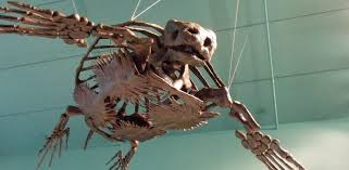 sea turtle skeletons hold clues for conservation noaa fisheries