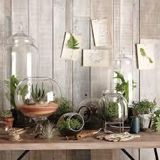 5 decorative terrarium ideas cozy bliss