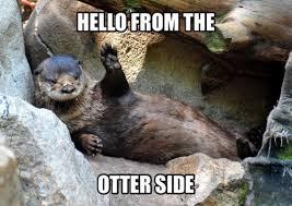Otter Meme - cute adele meme animal otter adele hello adele 25 ladylauren16