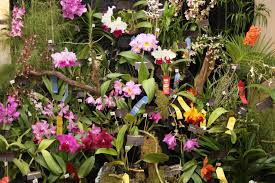 orchid plant fall plant sale orchid show kanapaha botanical gardens