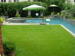the backyard oasis with lush grass yard and resort style pool