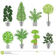 Large Indoor Plants Big Trees House Plants Collection Vector Illustration Stock