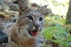 South Carolina wildlife images Gps tracking allows construction company to avoid wildlife gps jpg