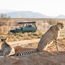 where to go on safari near cape town travel leisure