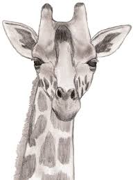 cartoon baby giraffe head pictures online images collection