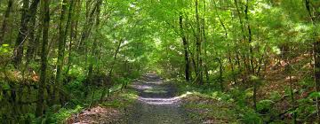 Rhode Island Forest images Home coventry jpg