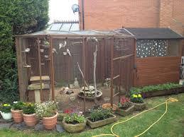aviary birds for sale peterborough cambridgeshire pets4homes