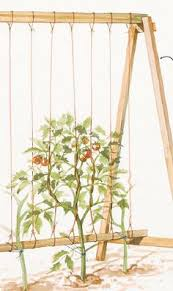 easy pea trellis pvc tomato trellis raised bed construction gardening