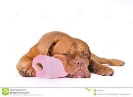 dog toilet paper holder puppy toilet training paper
