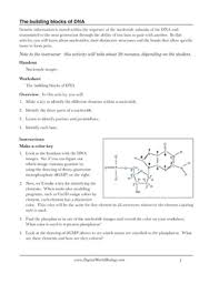 dna structure worksheet free worksheets library download and