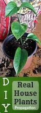 best 25 common house plants ideas on pinterest plants indoor