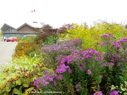 Flowering Shrubs New England - landscape janet davis explores colour