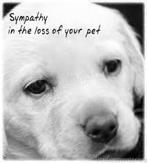 sympathy for loss of dog loss of your pet desicomments