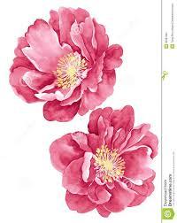 best 25 watercolor rose ideas on pinterest rose watercolour