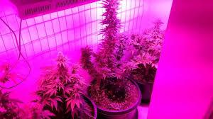 Led Grow Lights Cannabis Led Grow Lights Ideas Advantage Led Grow Lights U2013 Lighting