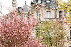 paris photography parc monceau in the spring cherry blossom