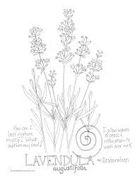 lavender coloring page my soulflower