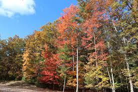 5 fall foliage drives michigan