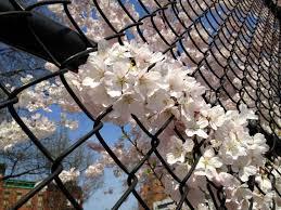 hell u0027s kitchen blossoms erbology