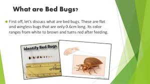 How To Identify Bed Bugs How To Identify Atlanta Residential Home Bed Bug Infestations