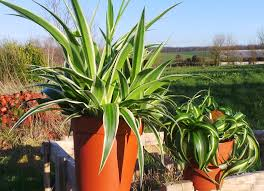 six non toxic plants for the home that are safe around children