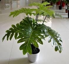 home plants decor charming indoor decorative plants 16 indoor plants design ideas