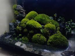 Nano Aquascaping Natura