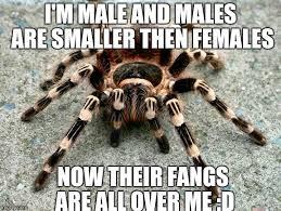 Spider Meme - attractive spider memes imgflip