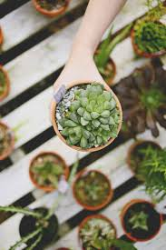 40 best cactus images on pinterest plants indoor plants and