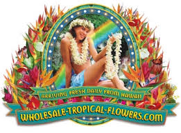 Flowers Wholesale Wholesale Tropical Flowers From Hawaii